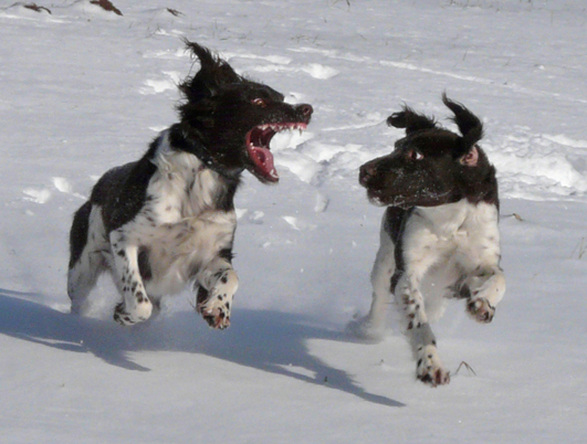 fährten im schnee marder